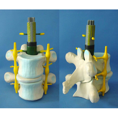 ENVIRONMENTAL PROTECTION PVC MATERIAL BRAIN AND NERVOUS SYSTEM ANATOMICAL MODEL NORMAL SPINE ZOOM MODEL -GASEN-RZSJ001