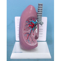 ENVIRONMENTAL PROTECTION PVC MATERIAL LUNGS RESPIRATORY MEDICINE ANATOMICAL MODEL LUNGS AND TRACHEA -GASEN-RZHX004