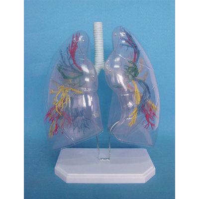 ENVIRONMENTAL PROTECTION PVC MATERIAL LUNGS RESPIRATORY MEDICINE ANATOMICAL MODEL TRANSPARENT LUNG SEGMENT -GASEN-RZHX005
