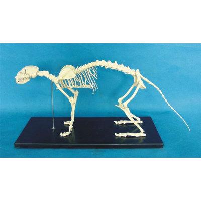 ENVIRONMENTAL PROTECTION PVC MATERIAL ANIMAL SKELETON MEDICAL ANATOMY MODEL CAT SKELETON MODEL -GASEN-RZDW004