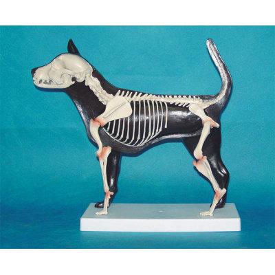 ENVIRONMENTAL PROTECTION PVC MATERIAL ANIMAL SKELETON MEDICAL ANATOMY MODEL HALF DOG HALF SKIN BONES -GASEN-RZDW013