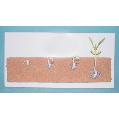 ENVIRONMENTAL PROTECTION PVC MATERIAL PLANT SIMULATION TEACHING MODEL  LEGUME SEED MODEL -GASEN-RZZW006