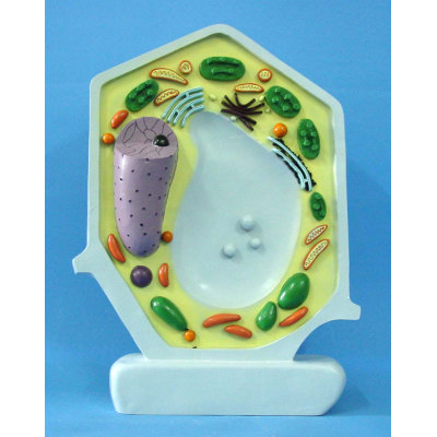 ENVIRONMENTAL PROTECTION PVC MATERIAL PLANT SIMULATION TEACHING MICROSCOPIC ANATOMY MODEL PLANT CELL -GASEN-RZWG004