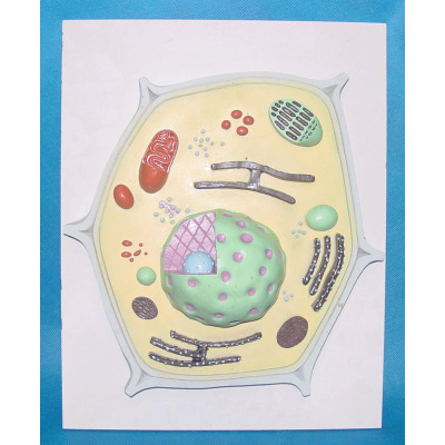 ENVIRONMENTAL PROTECTION PVC MATERIAL PLANT SIMULATION TEACHING MICROSCOPIC ANATOMY MODEL PLANT CELL -GASEN-RZWG005