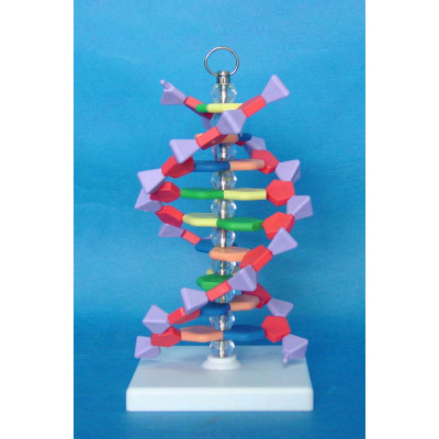 ENVIRONMENTAL PROTECTION PVC MATERIAL MICROSCOPIC MODEL OF SMALL DNA SIMULATION TEACHING MODEL EUROPEAN SMALL DNA MODEL -GASEN-RZWG006
