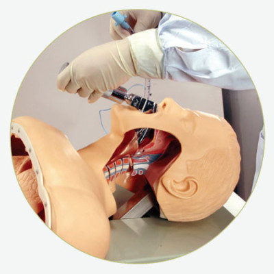 AIRWAY INTUBATION SIMULATOR  GASEN-J50