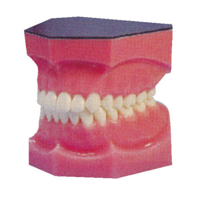 AMPLIFIED TEETH MODEL GASEN-B10034
