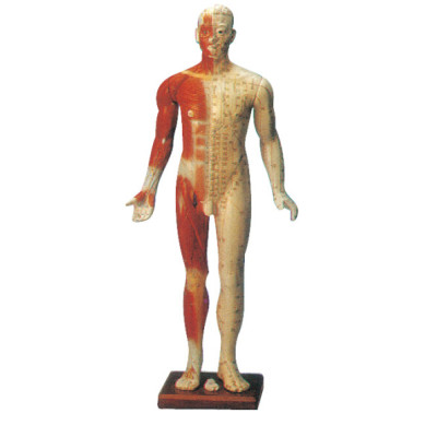 FOURTEEN CHANNEL ACUPUNCTURE MANIKIN (MALE, 84CM) GASEN-C00003