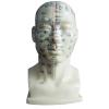 ACUPUNCTURE HEAD (LIFE SIZE) GASEN-C00012
