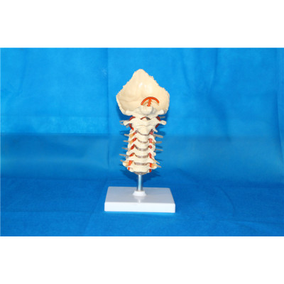 ENVIRONMENTAL PVC MATERIAL Natural big band cervical nerve -GASEN-RZGL025