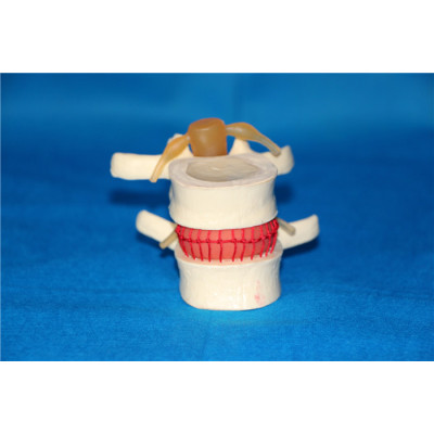 ENVIRONMENTAL PVC MATERIAL MEDICAL TEACHING HUMAN SKELETON MODEL BONE SURGERY PRACTICE LARGE SPINE UNDER PRESSURE GASEN-RZGL065