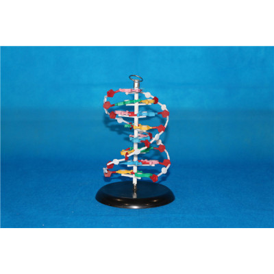 ENVIRONMENTAL PROTECTION PVC MATERIAL MICROSCOPIC ANATOMY SIZED DNA TEACHING SIMULATION MODEL CHINESE SMALL DNA MODEL -GASEN-RZWG002