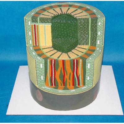 GEOGRAPHY TEACHING MODEL MONOCOTYLEDON STEM MODEL GEOGRAPHICAL SIMULATION  GASEN-R200101