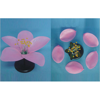 GEOGRAPHY TEACHING MODEL MONOCOT  FLOWER MODEL PEACHBLOSSOM  FLOWER GEOGRAPHICAL SIMULATION GASEN-R200108