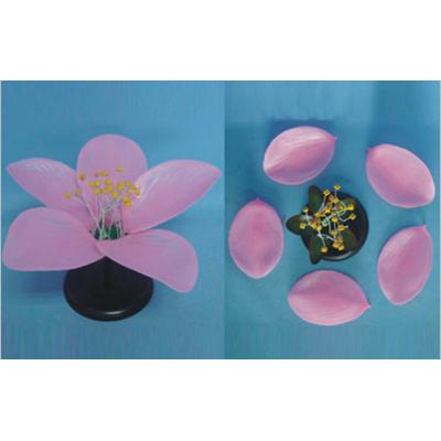 GEOGRAPHY TEACHING MODEL MONOCOT  FLOWER MODEL PEACHBLOSSOM  FLOWER GEOGRAPHICAL SIMULATION GASEN-R200108