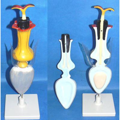 GEOGRAPHY TEACHING MODEL MONOCOT  FLOWER MODEL PEACHBLOSSOM  FLOWER GEOGRAPHICAL SIMULATION GASEN-R200110