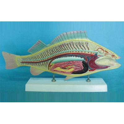 GEOGRAPHY TEACHING MONOCOT ANIMAL MODEL FISH ANATOMICAL MODEL GASEN-R190108