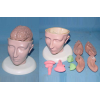 SMALL DELUXE HEAD MODEL W/PINKISH 8-PARTS BRAINS GASEN-R050115