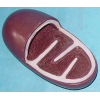 MODEL OF MITOCHONDRION PVC MATERIAL HUMAN ANATOMY MODEL HIGH  MICROSCOPIC ANATOMICAL MODE GASEN-R180124