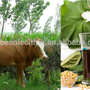 Factory offer excellent quanlity soyabean lecithin