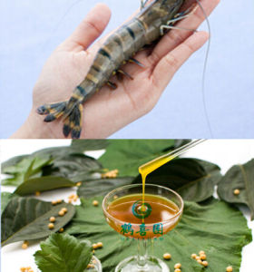 Water-soluble soya lecithin for aquaculture species feeds