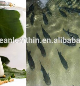 Soybean water soluble lecithin