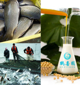 soya lecithin organic fish feed ingredients