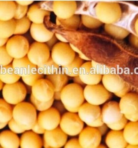 Soybean Extract Lower Cholesterol
