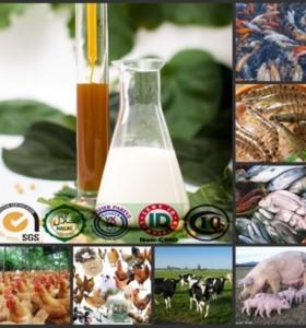 HXY-2S water soluble emulsifier feed grade soya lecithin liquid supplier