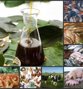 fish and shrimp feed grade emulsifier liquid soya lecithin