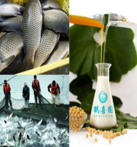 HXY-2S Aqua feed grade water soluble soya bean lecithin soybean extract