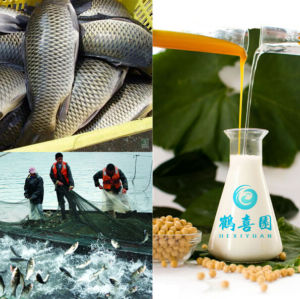 Organique de lécithine de soja aliments pour poissons ingrédients