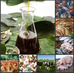 Emulsifier liquid Soya Lecithin as Feed Additive