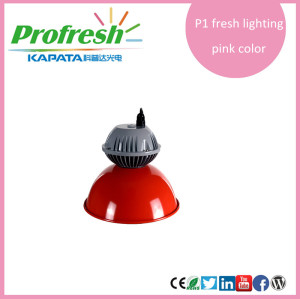 10w hot selling longlife profresh pendant light