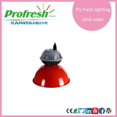 10w venta caliente longlea profresh luz pendiente