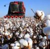How good is Xinjiang cotton? Cotton non-woven fabric is better, suntech non-woven fabric organization loves human health