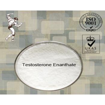 Bodybuilder Injection Raw Testosterone Enanthate CAS 315-37-7