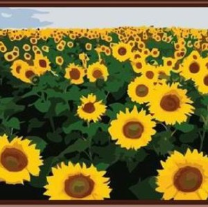 SGS CE yiwu manufactor hand painted DIY digital oil painting by numbers sunflower design