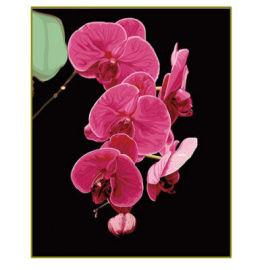 Blume malen nach zahlen- en71-3- astmd- 4236 acrylfarbe- Lack Junge 40*50cm g069