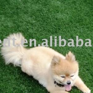 Antibacterial césped Artificial para perro jugando