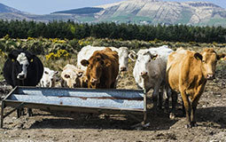 Serving Livestock