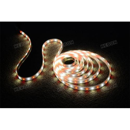CE, RoHS Approved Colorful 12V LED Strip Lights Applied for Decoration Filed