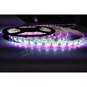 Popular 4 en 1 LED DC12V / 24V RGBW / WW SMD5050 LED Flexible tira de luz