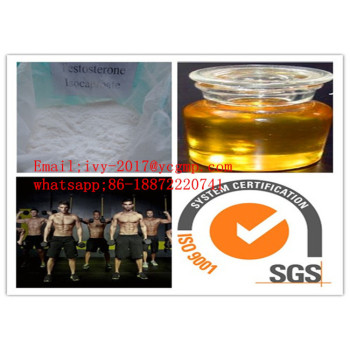 Bodybuilding Steroids Test Powder Testosterone Isocaproate for MenCAS 15262-86-9