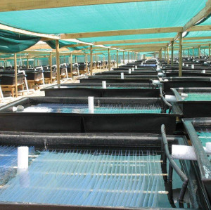 FDA food grade and good aging-resistance Aquaculture sheet