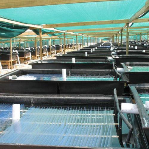 FDA food grade and good aging-resistance Aquaculture sheet