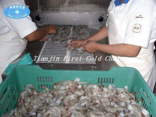 China solo congelador rápido espiral 500kg / h para el camarón con acero inoxidable