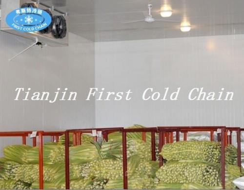 Congelado rápido, pequeña cámara fría para carne, pescado, pollo, frutas y verduras.