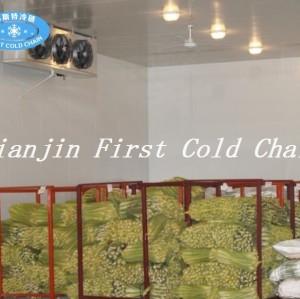 Chambre froide hautement efficace pour la viande ou le poisson congelés