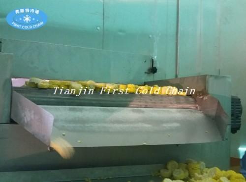 Congelador IQF Congelación de fruta fresca y vegetales